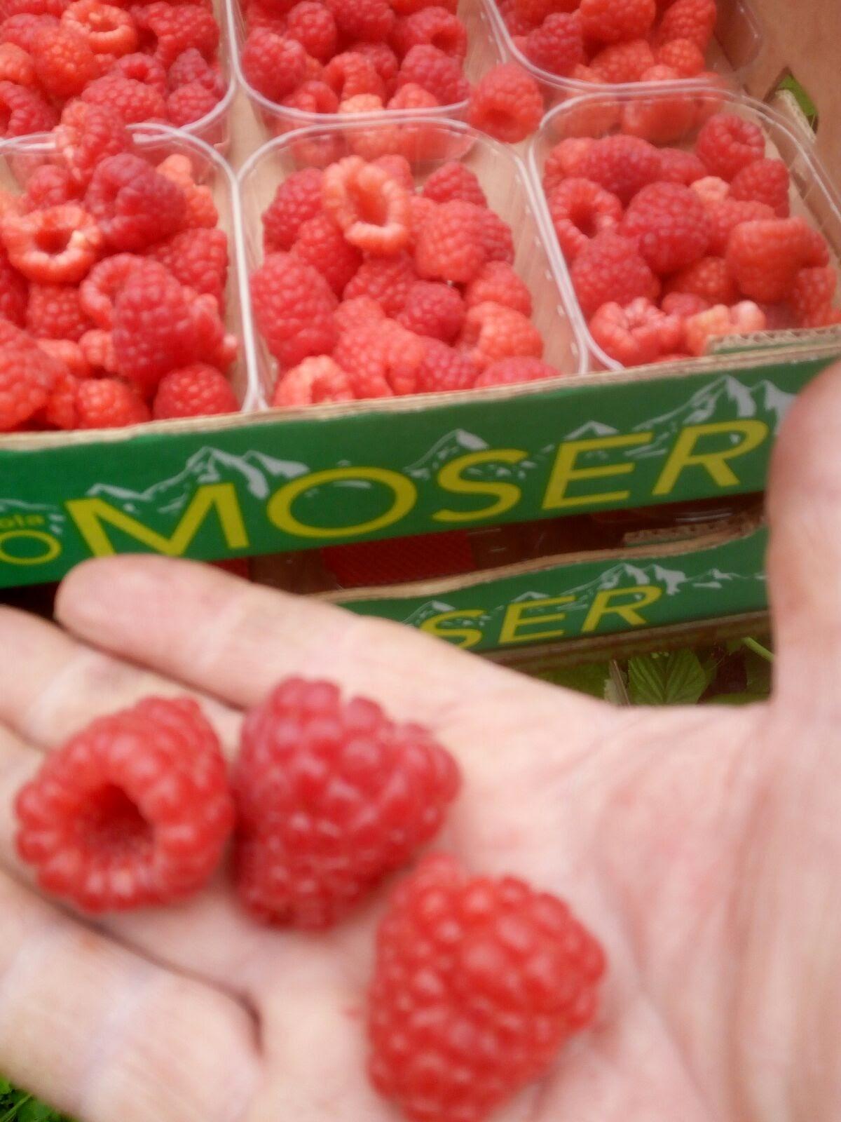 Come Coltivare I Lamponi vendita online frutti di bosco - lamponi - maso moser
